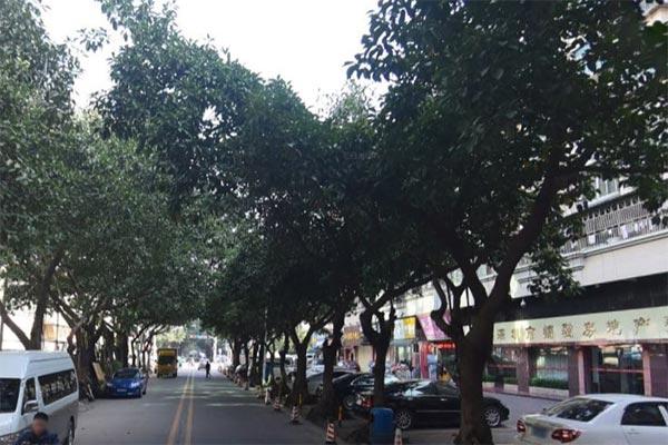 深圳市西乡街道麻布村卤道夫餐馆送开业花篮