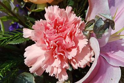 东莞母亲节订花