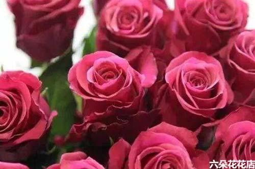 16朵玫瑰花多少钱