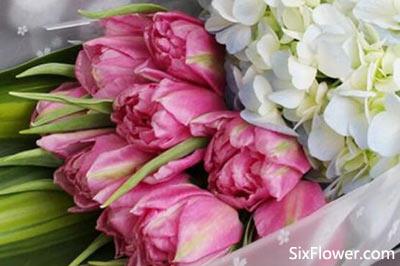 郁金香的花语是什么