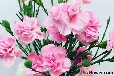 教师节是送康乃馨好还是送向日葵好?