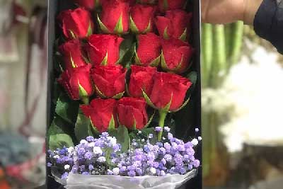 大家送得最多的玫瑰花是几朵?