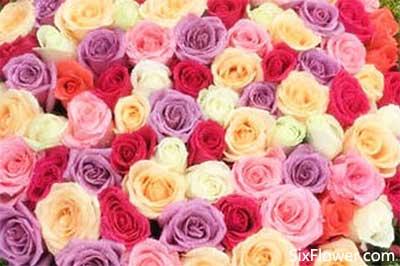 收到89朵玫瑰花是什么意思?收到89朵玫瑰代表什么意思?