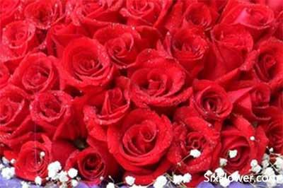 收到88朵玫瑰花是什么意思?收到88朵玫瑰代表什么意思?