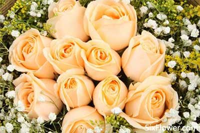 杭州花店代送花,六朵花杭州花店代写送花祝福语服务!