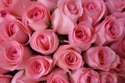 收到101朵玫瑰花是什么意思?101朵玫瑰花有哪些款式?