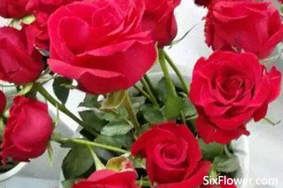 七夕节送花的讲究,七夕节可以提前送花吗?这些花七夕节最常送!