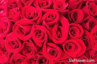 收到92朵玫瑰花是什么意思?收到92朵玫瑰代表什么意思?