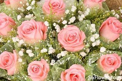 520适合送什么玫瑰花?