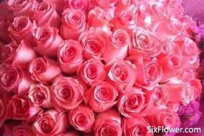 49朵粉玫瑰的花语是什么?49朵粉玫瑰代表什么意思?