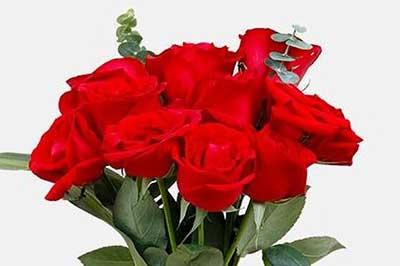 几朵玫瑰花代表一心一意的含义?