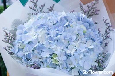 最适合送老师的几种花推荐!这些花都可以,花店常年都有!