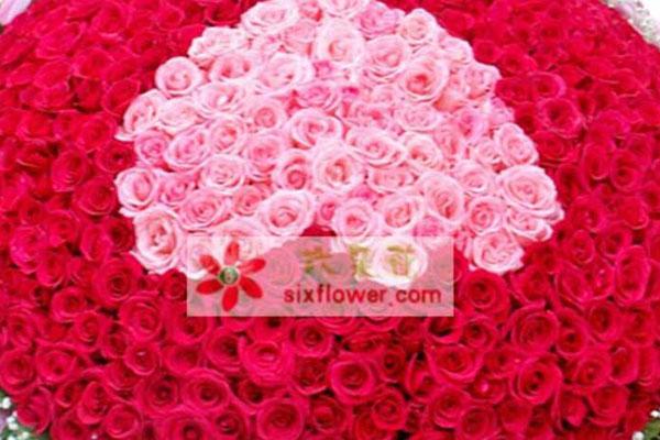 999朵玫瑰花的花语是什么?