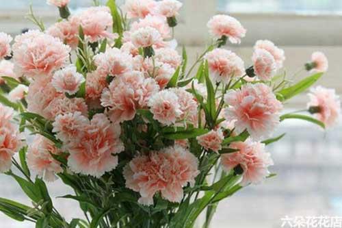 90岁老人生日送什么花