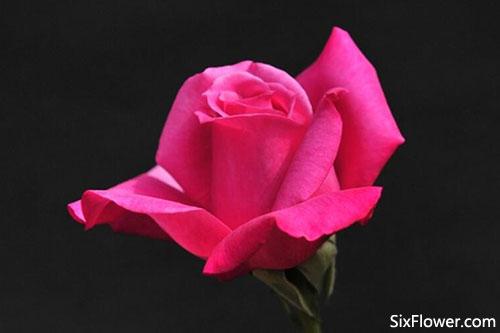 最浪漫的送花方式是什么?哪种送花方式最好?