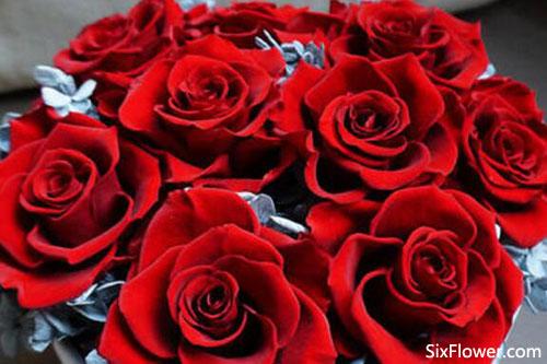 收到12朵玫瑰是什么意思?收到12朵玫瑰的含义是什么?
