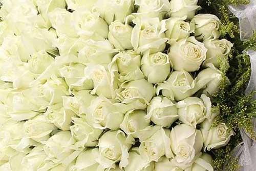 表白是送红玫瑰花还是白玫瑰好一些?