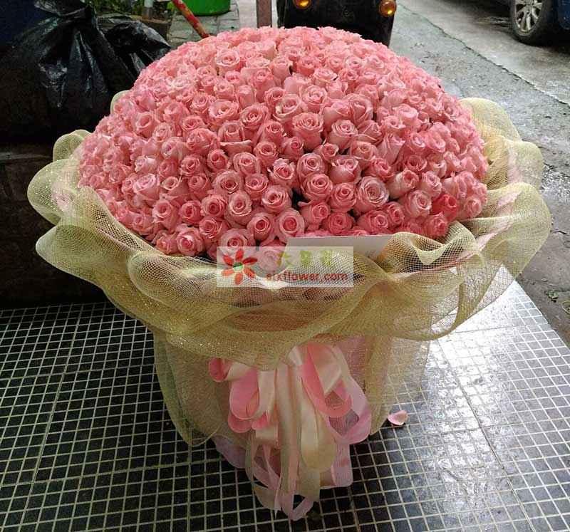 365枝粉色玫瑰