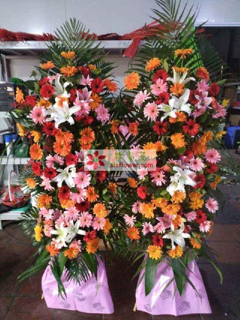 各色太阳花搭配,5朵白色百合,散尾葵、巴西叶搭配