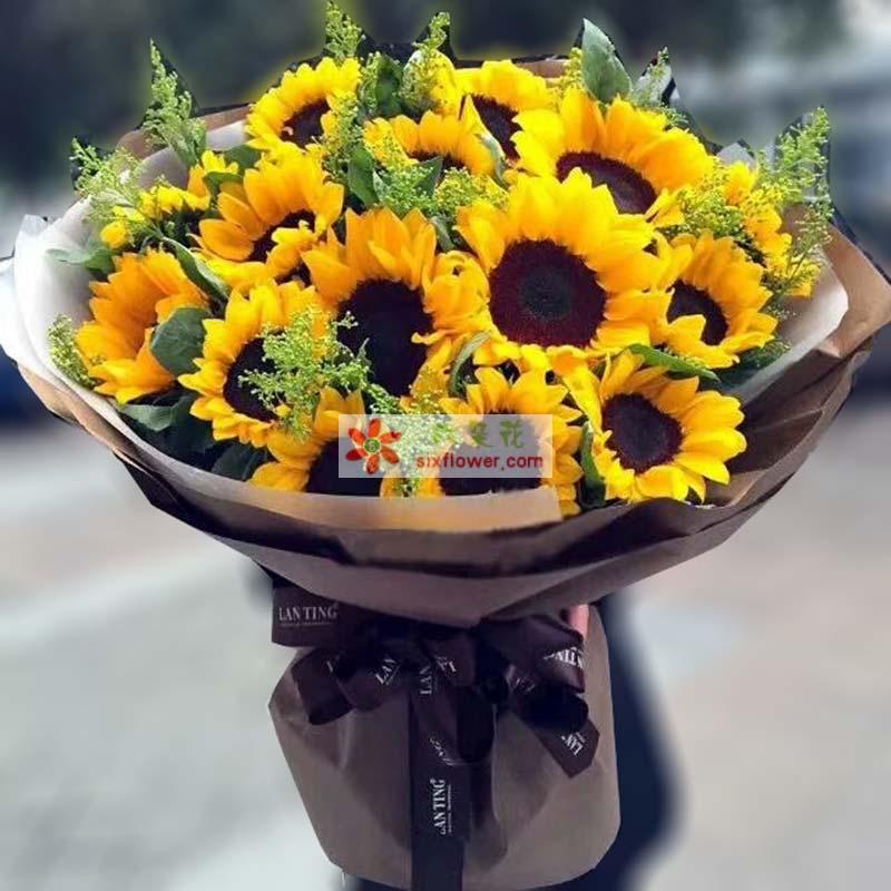 16枝向日葵,黄英、配叶丰满