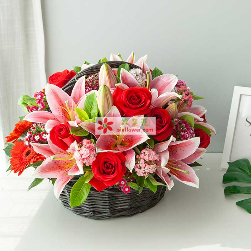 多头粉色百合2枝(5朵以上/枝),8枝红玫瑰,6枝红太阳花,混色石竹梅、栀子叶搭配