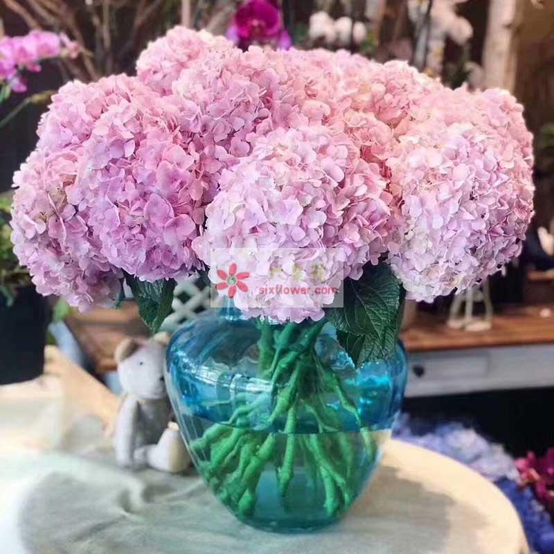 10只粉色绣球花