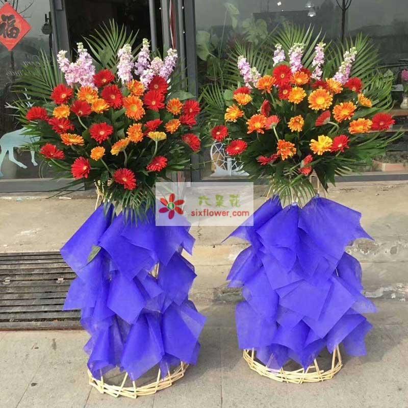 40枝各色扶朗,6只紫罗兰,配叶点缀、散尾葵搭配;