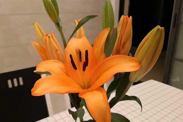 橙色百合的花语是什么?
