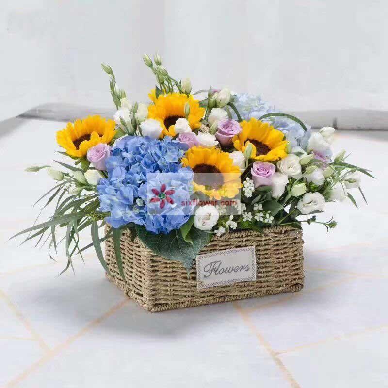 4枝向日葵,2只蓝色绣球花,9枝紫玫瑰,20枝桔梗,白色相思梅、排草、配叶点缀;