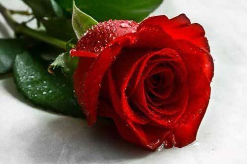 老婆生日送什么花好_老婆过生日送什么花?-六朵花