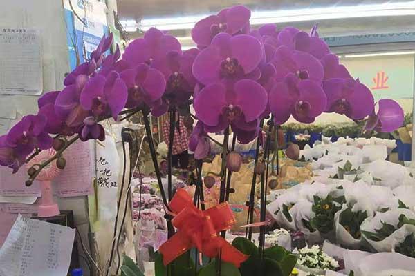 南京锁金五村花店