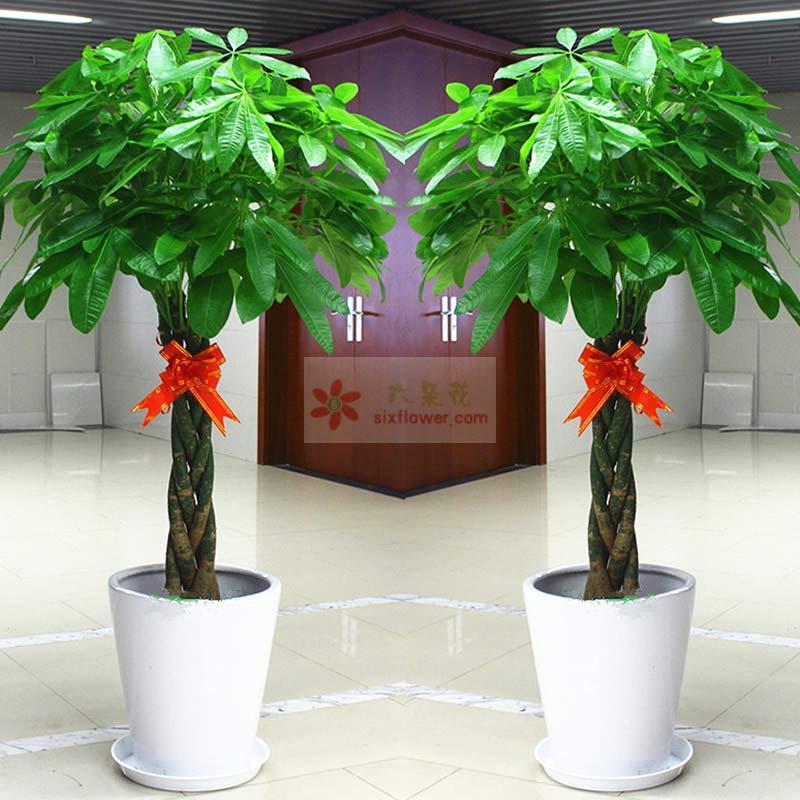 三编发财树