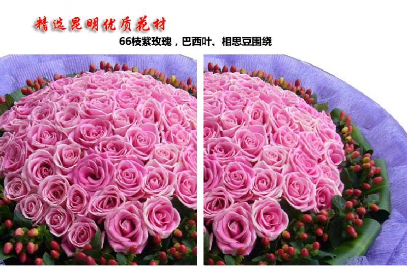 66枝紫玫瑰,巴西叶、相思豆围绕;
