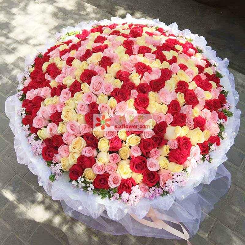 365枝玫瑰,红色、粉色、香槟色混搭,周围相思梅点缀