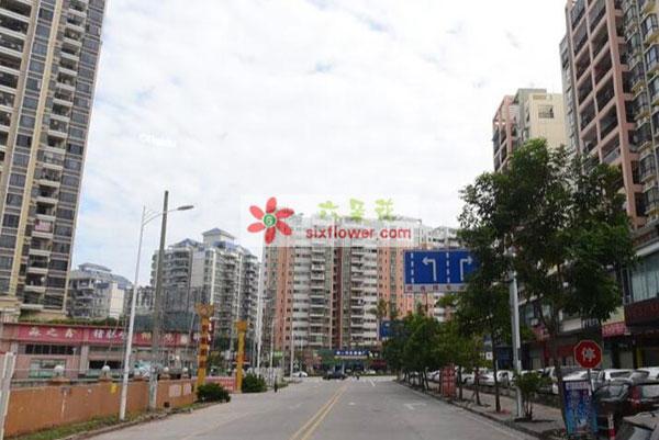 送惠州市惠城区河南岸街道白泥二路的花