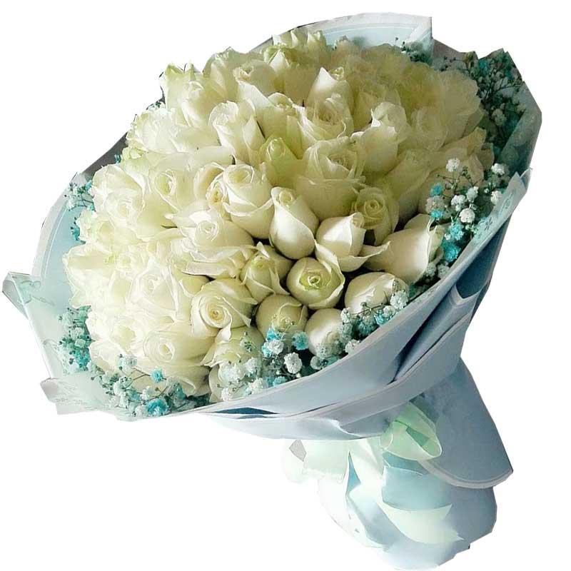 99枝白色玫瑰,蓝色满天星周围点缀