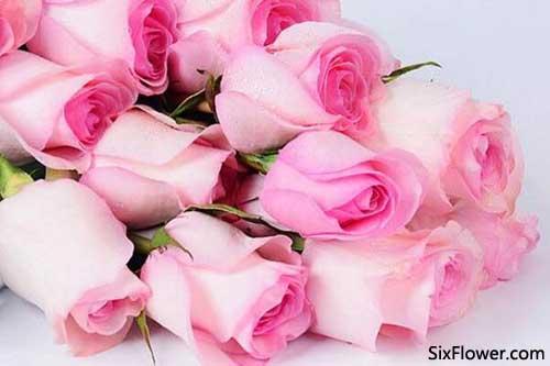 520是送粉玫瑰还是送红玫瑰好?