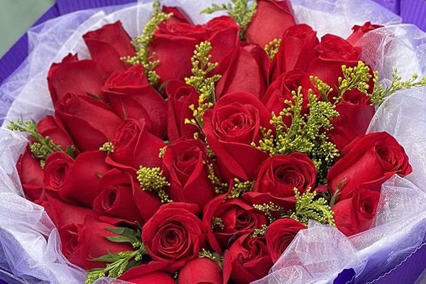 66朵玫瑰花束图片,66朵玫瑰花束有哪些?