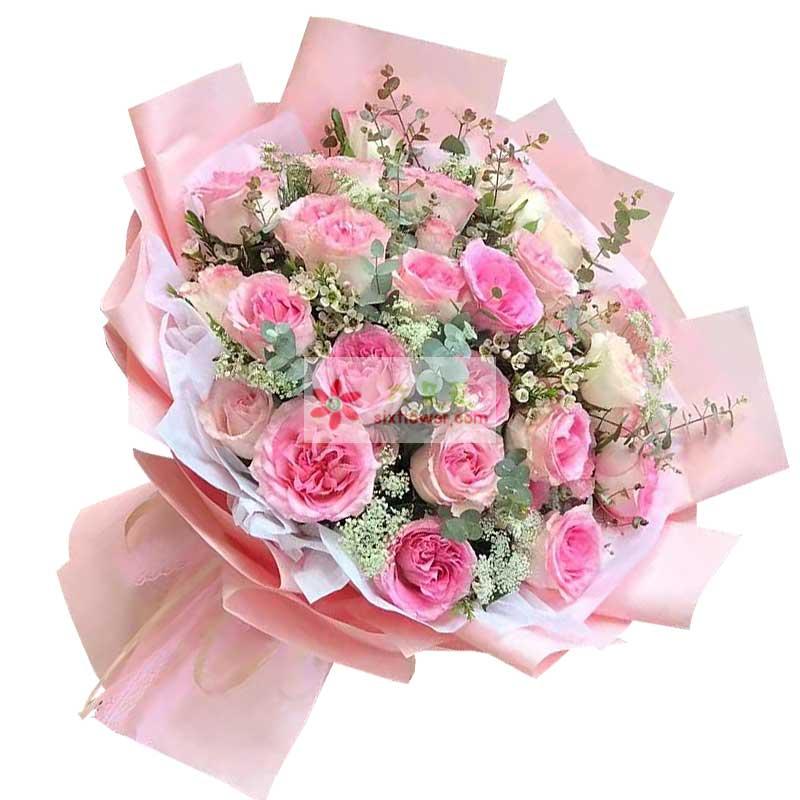 19朵苏醒粉玫瑰,我的世界一片灿烂