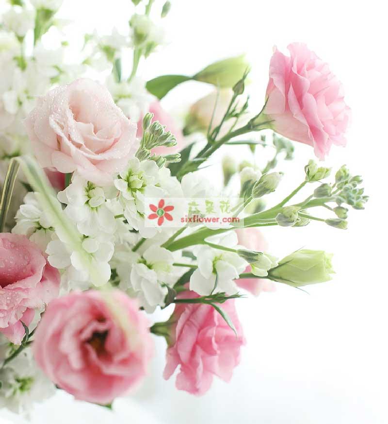 白色紫罗兰2扎、粉色洋桔梗1扎,斑春兰