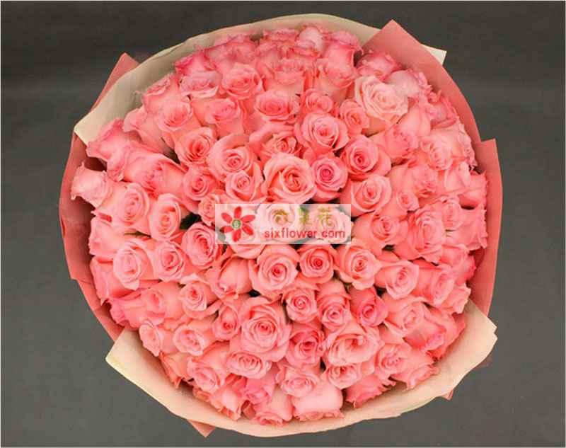 99枝戴安娜玫瑰