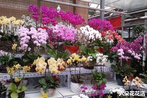 七夕节鲜花价格