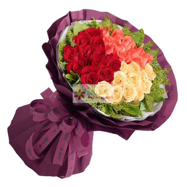 33朵玫瑰,其中红玫瑰11朵,粉玫瑰11朵,香槟玫瑰11朵,周围黄英丰满