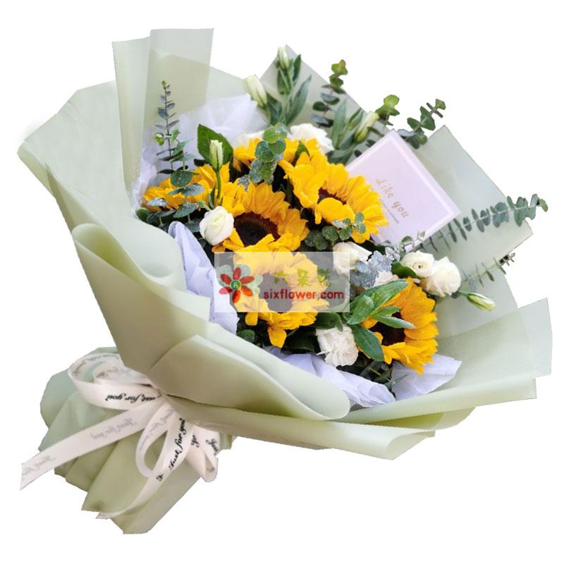 6朵向日葵,生命之光