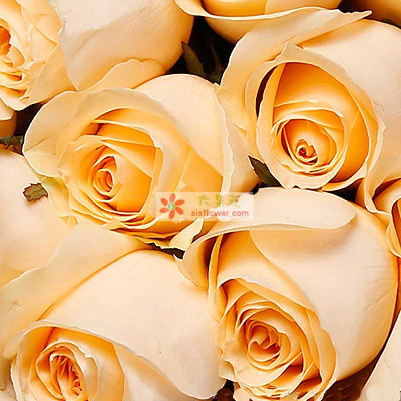 11枝香槟玫瑰,勿忘我