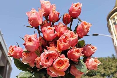 番禺区白色情人节订花,广州花店,为您的爱情添彩!