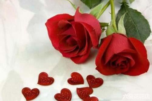 郑州新密市玫瑰花多少钱一束?