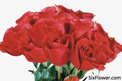 收到46朵玫瑰花是什么意思?收到46朵玫瑰花代表什么含义?